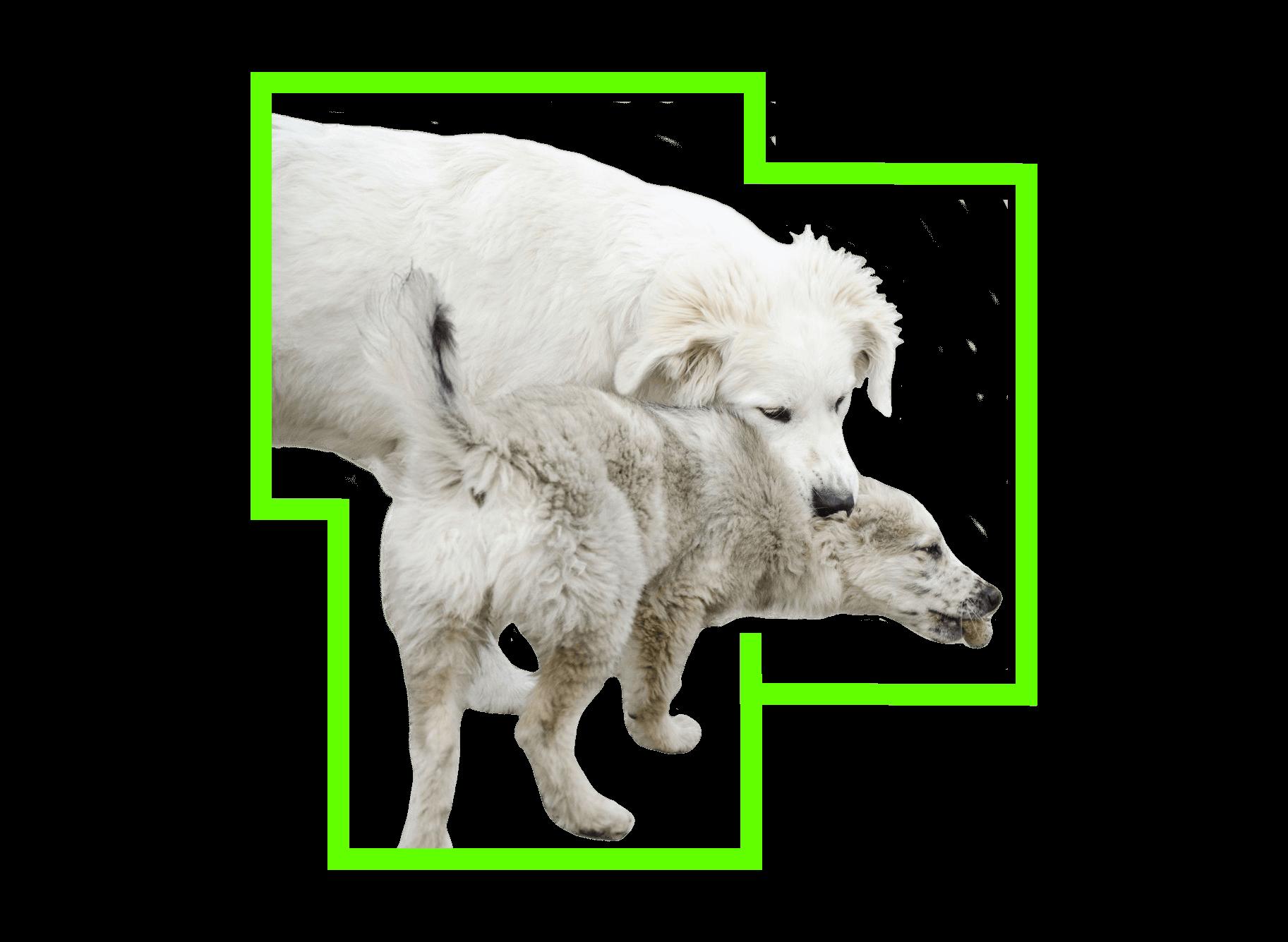 Comprendere il comportamento del cane