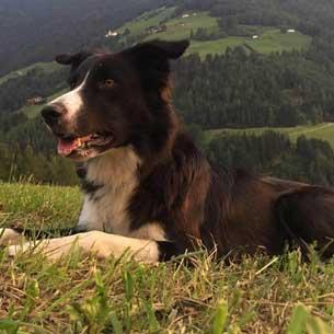 Mun - sheepdog, disc dog