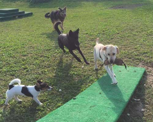 cani in socializzazione